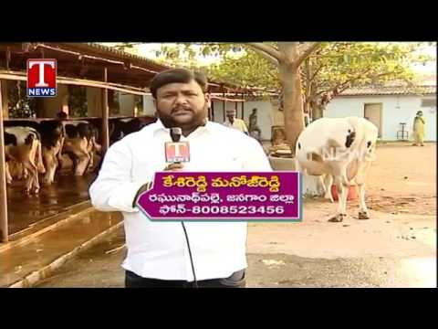 Farmer Kesireddy Manoj Reddy About Dairy Farming   Chenu Chelaka   Telangana   TNews