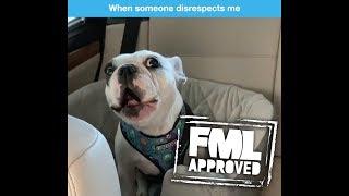 Disrespectful Puppy