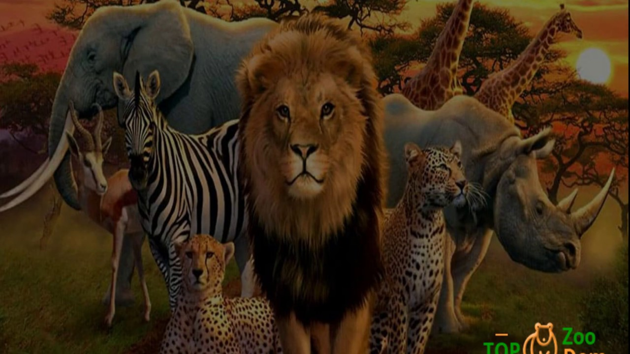 Dom Zoo