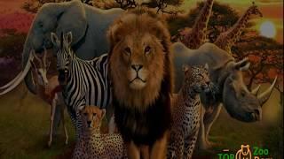 """Купить экзотических животных из питомника  - """"Zoo-Dom"""""""