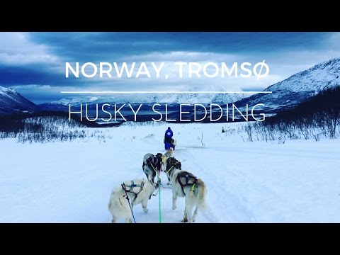 Husky Sledding | Norway Tromsø