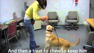Humane Society Training Video Part 1. Calming Excitable Dogs