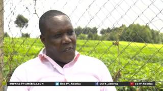 Kenya tea farmers, manufacturers turn to Chinese financing to expand
