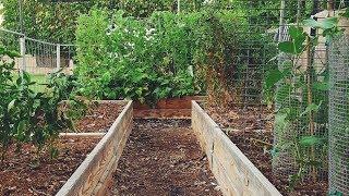 Our secret to a successful Desert Garden {with little work}