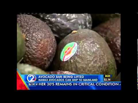 KHON - Hirono Pushes USDA To Lift Ban On Hawaii Sharwil Avocado Shipments To The Mainland