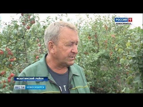 В Искитиме учёный создал питомник растений для сохранения сибирских сортов ягод и фруктов