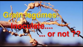 GCTV13: Legumes - To Inoculate or Not?