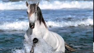 Susan Boyle, Wild Horses by susanboylemusicuk
