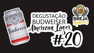 Desgustação - Budweiser