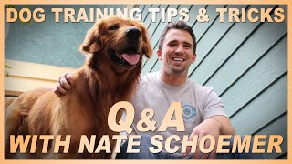Dog Training Tips and Tricks | Q&A With Professional Dog Trainer Nate Schoemer