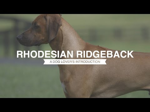 RHODESIAN RIDGEBACK: A DOG LOVER'S INTRODUCTION