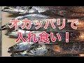 淡路島のオカッパリが熱かった!
