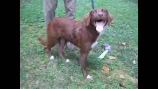 Lottie Happy Dog Rescue