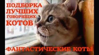 ФАНТАСТИЧЕСКИЕ ГОВОРЯЩИЕ КОТЫ  ЛУЧШАЯ ПОДБОРКА FANTASTIC CAT