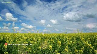 Relaxing Soft Music, WebMusic, Stress Relief Peaceful Music (Love in Spring)