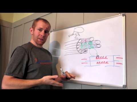 HIIT vs. Endurance training part 2