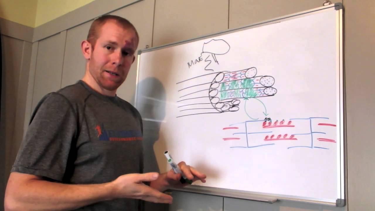 HIIT vs Endurance training (Part 2)