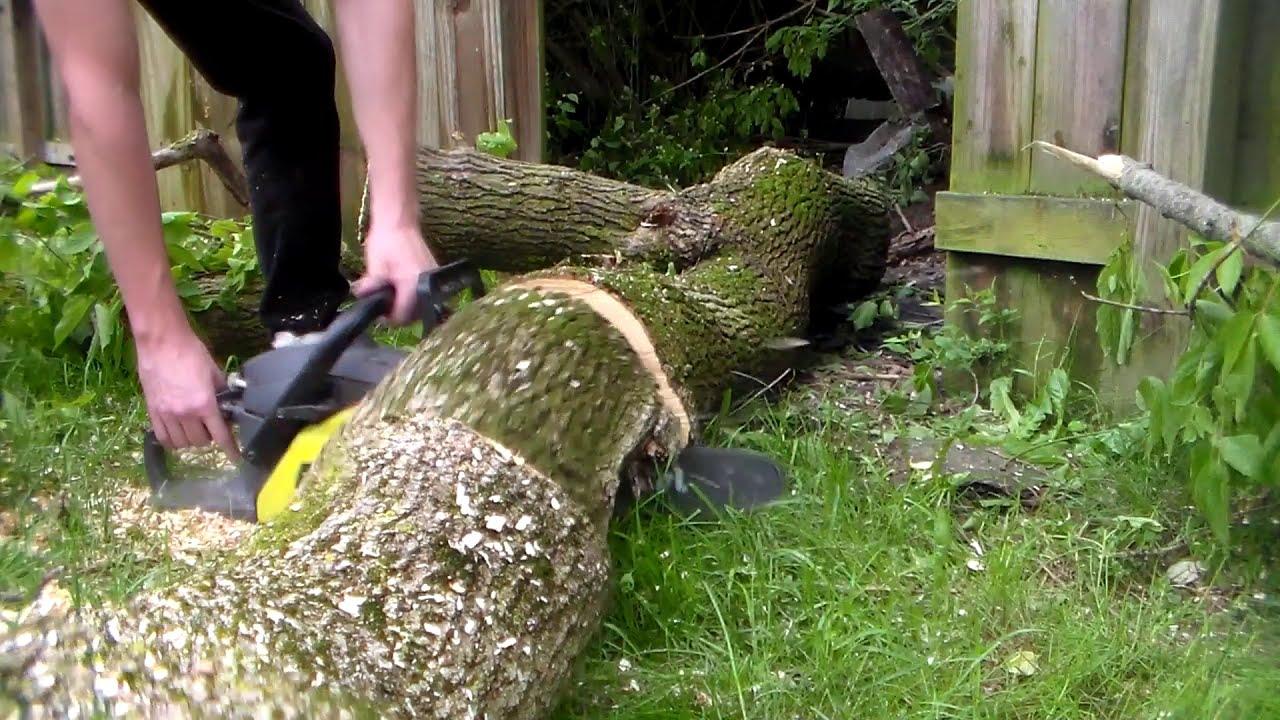 Backyard Tree Removal - YouTube