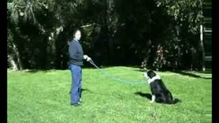 Hanrob Dog Training Sydney - Pet Dog Obedience Training For Recalling Your Dog Or Puppy.