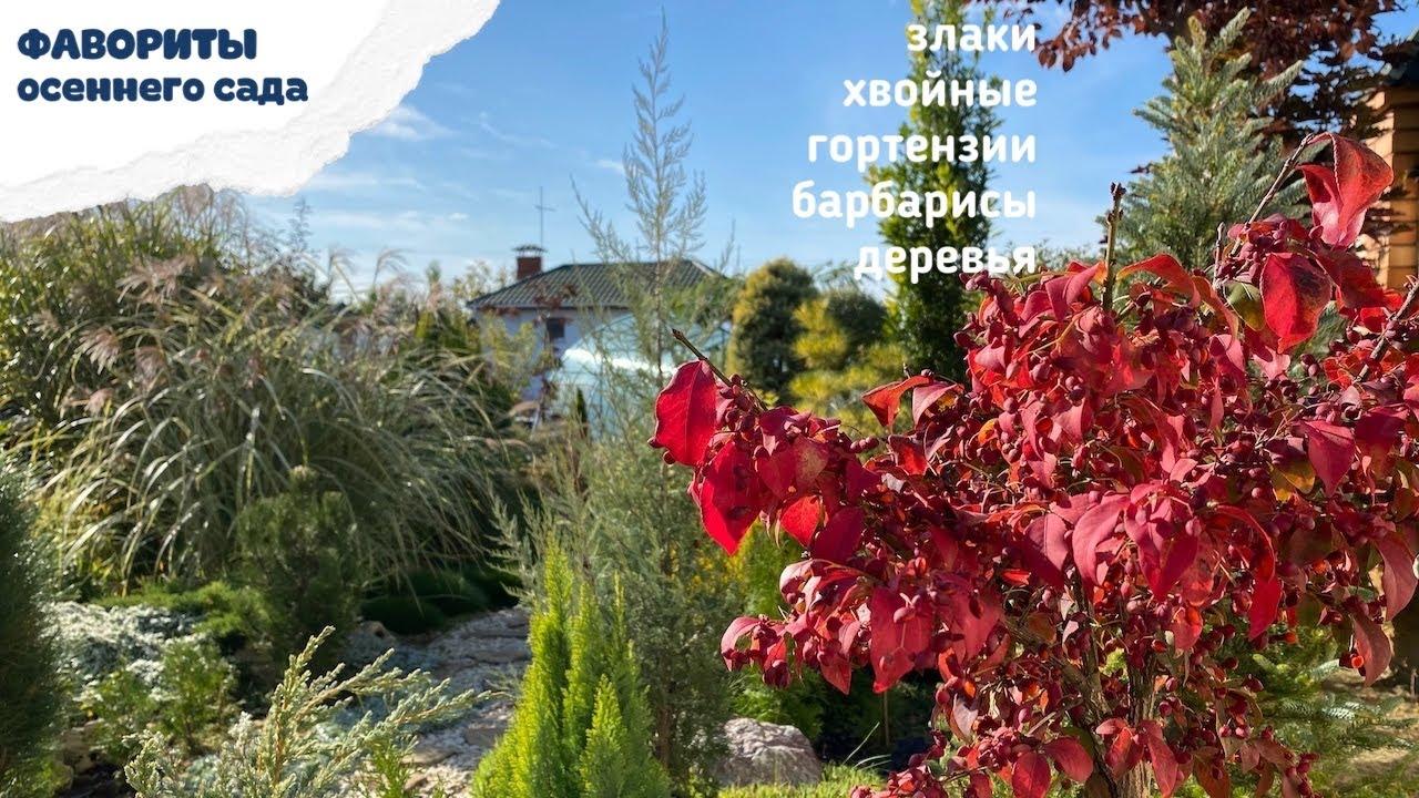 Без этих растений не представляю НАШ ОСЕННИЙ САД ! Хвойные, Злаки,  Деревья…