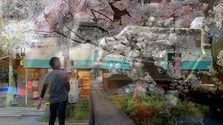 Kawaguchi Kyogo - Sakura (full cover acoustic guitar)