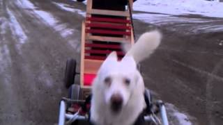 Dog Sled With Wheels