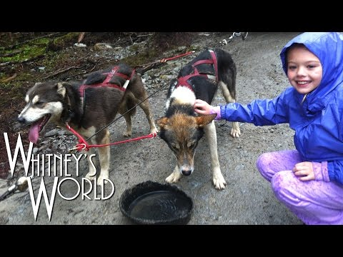 Sled Dog Mushing in Alaska | Iditarod Training | Whitney