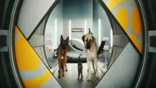 """""""Кошки против собак"""" в кинотеатрах города"""