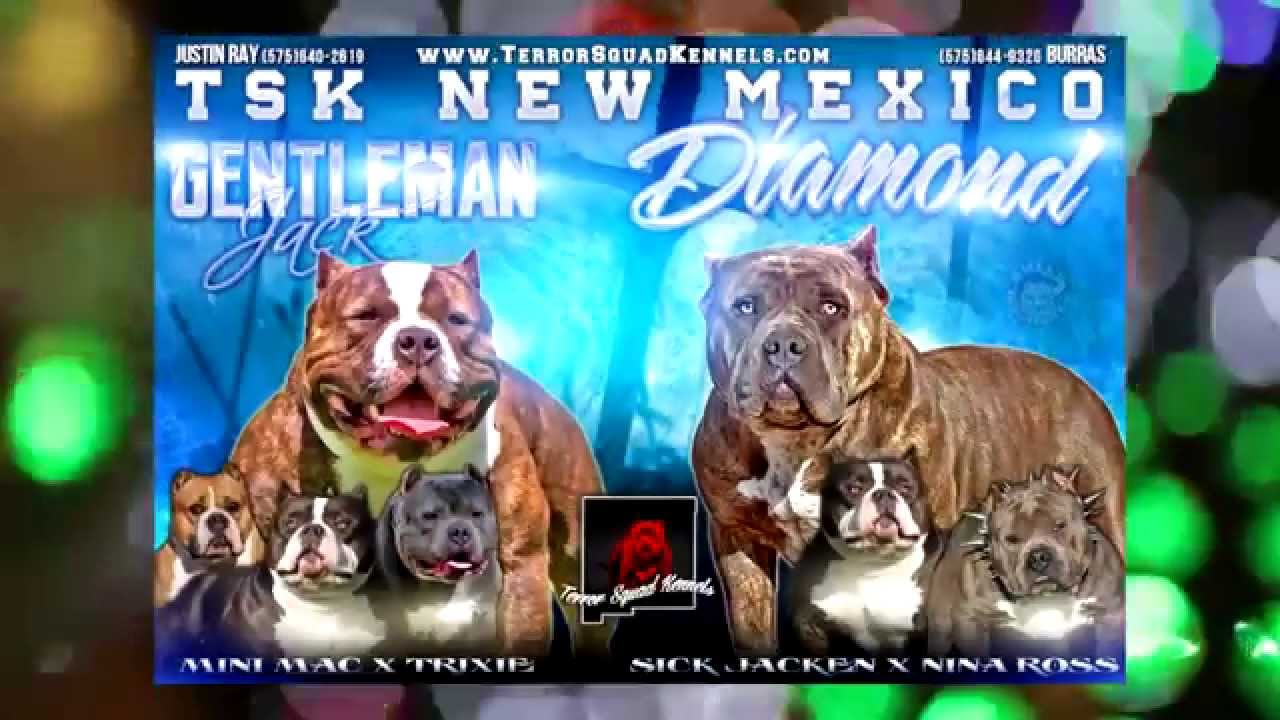 American Bully Graphics Breeding Banners Youtube