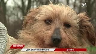 В год Желтой Собаки возьмите питомца из приюта в семью