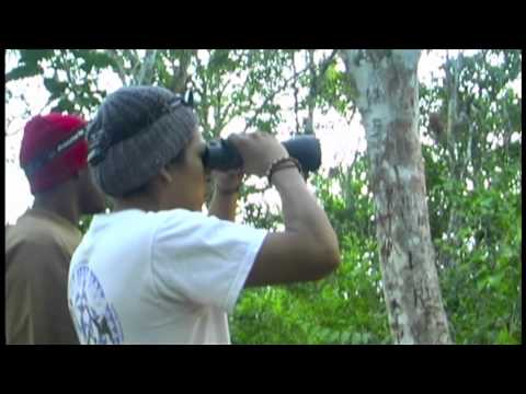 NMSU Anth 497/506 Belize Field School on Primate Behavior and Ecology 2011.mov