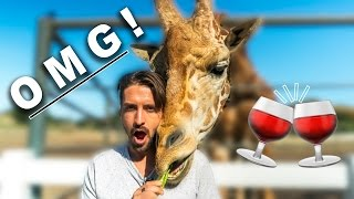 Malibu Wines Safari |  Wine Tasting & Feeding Stanley The Giraffe