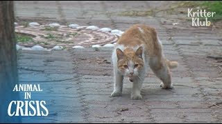 'HELP!' Stray Cat Pleads For Helping His Friend Be Treated (Part 2) | Animal in Crisis EP104