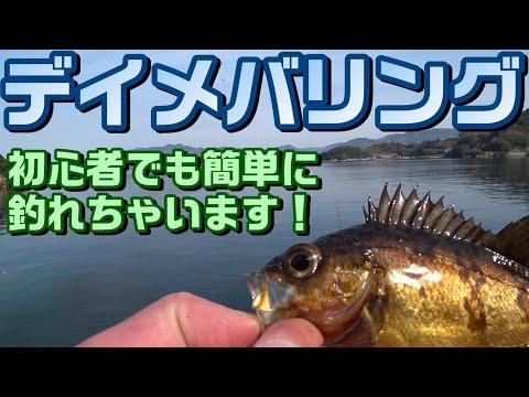 メバリング~初心者にもオススメなデイメバリング!昼の漁港で簡単に釣れちゃいます!Japanese rockfish