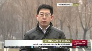 Chinese dairy farms face closure due to overexpansion, cheap imports