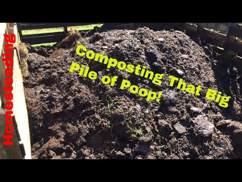 Composting Cow Manure