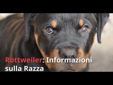 Razza Rottweiler: Informazioni e Consigli Utili