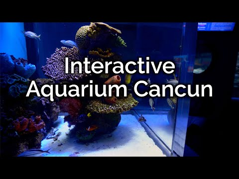 Interactive Aquarium Cancun- Cancun Mexico 4k
