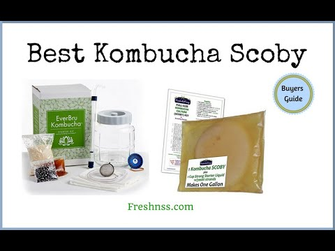 best-kombucha-scoby-(2020-buyers-guide)