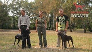 Охотничьи собаки. 10 серия. Немецкая короткошерстная легавая
