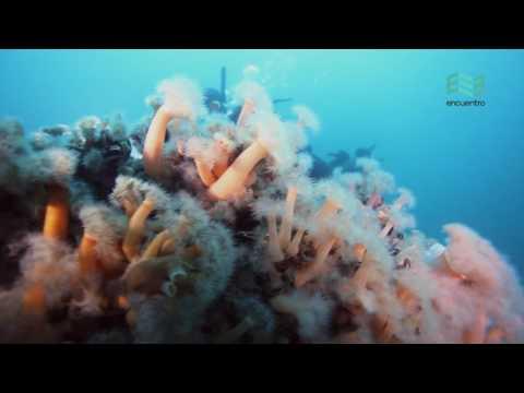 Atlántico Sur: Buceo en el mar Argentino (capítulo completo) - Canal Encuentro