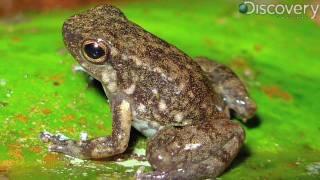 New Amphibians Discovered