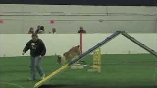 Greater Lincoln Obedience Club March 2013 Agility Trial