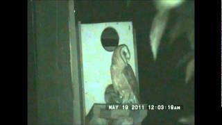 Yori Ranches Owlets May 18, 2011