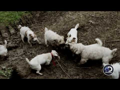 "RATS | 2016 | Exclusive Clip ""Sniffing Out Rats"" HD, Morgan Spurlock"