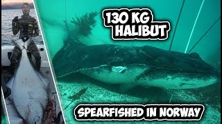 RECORD BREAKING 129,5 kilo HALIBUT spearfished in Norway!!