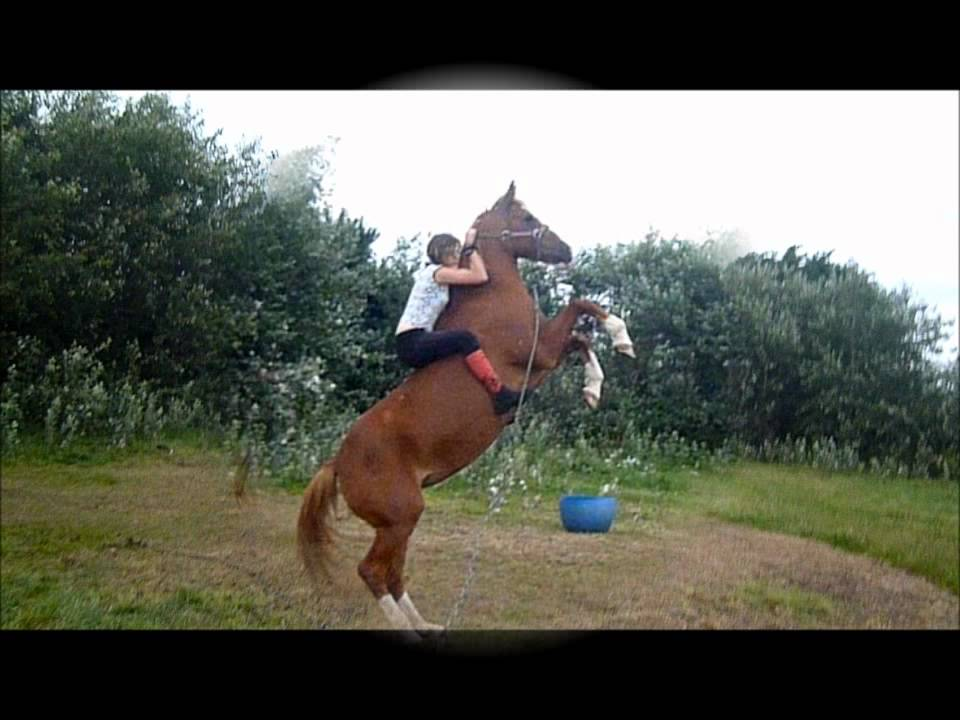 photo cheval qui cabre