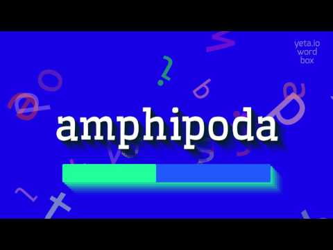 "How to say ""amphipoda""! (High Quality Voices)"