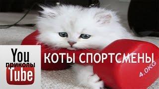 коты спортсмены #1