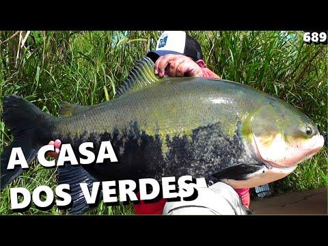 Tambacus e Tambaquis no LAGO VERDE (FISHINGTUR #689)e muitas Dicas de Pesca